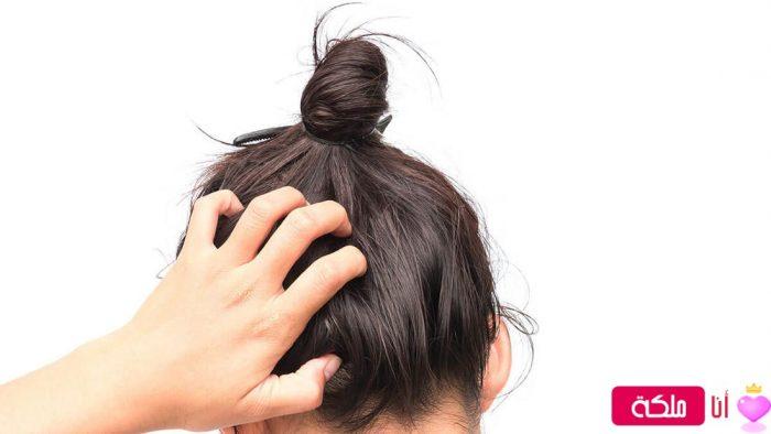 افضل شامبو لتساقط الشعر